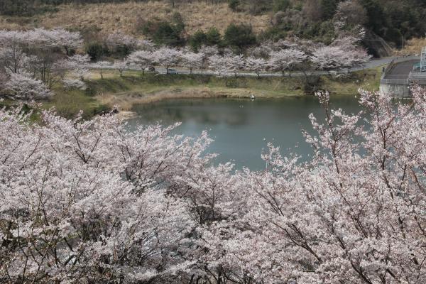 『つくし湖』の画像