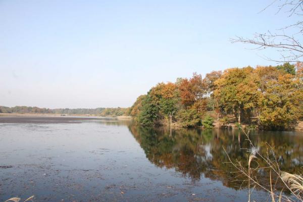 『大池』の画像