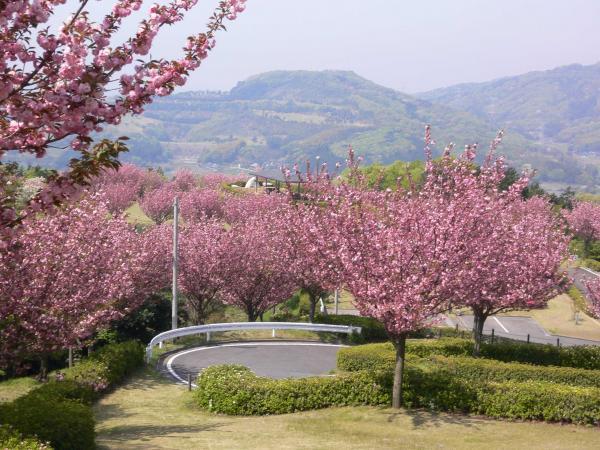 画像:富谷山ふれあい公園