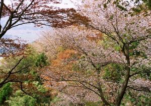 画像:平沢林道2