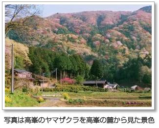 『写真は高峯のヤマザクラを高峯の麓から見た景色』の画像