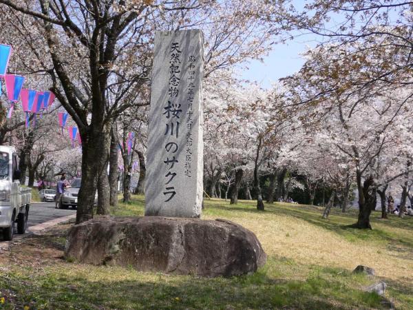 『桜川のサクラの石碑』の画像