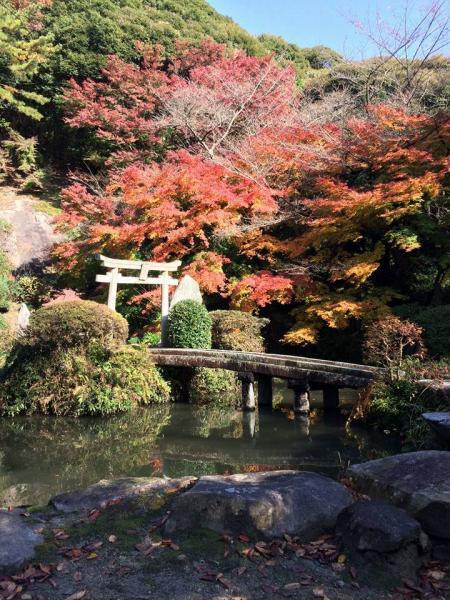 『『『椎尾山薬王院紅葉20161122』の画像』の画像』の画像