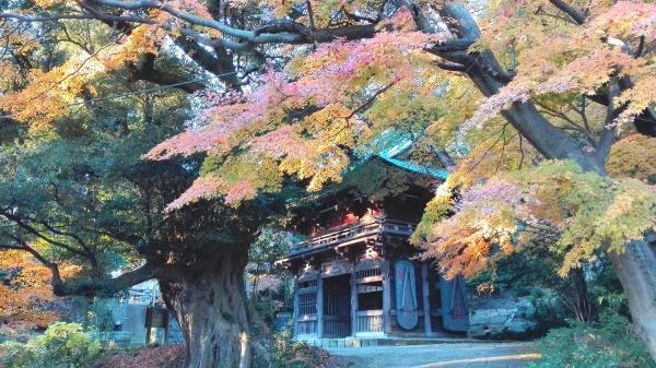 『薬王院山門紅葉20161211』の画像