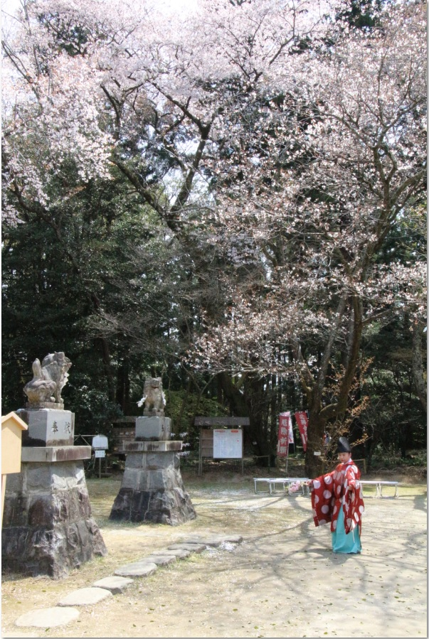 『『春の桜川フォトコンテスト 優秀賞 まつりの舞 磯部稲村神社』の画像』の画像