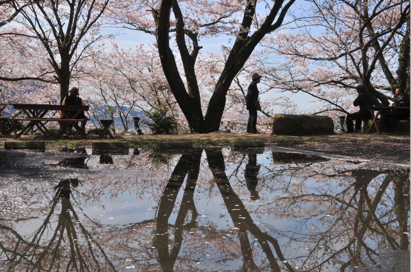 『春の桜川フォトコンテスト 特別賞 雨後の雨引山 雨引観音』の画像