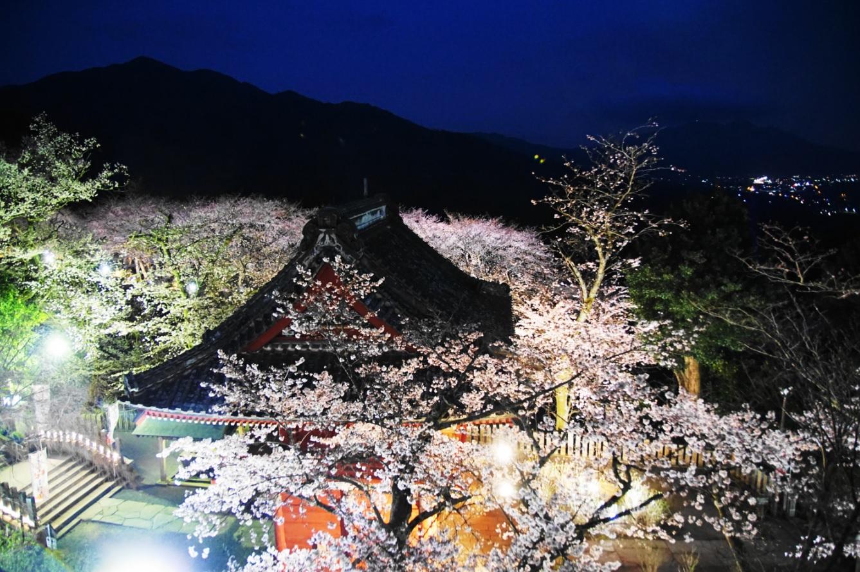 『春の桜川フォトコンテスト 特別賞 満開の時 雨引観音』の画像