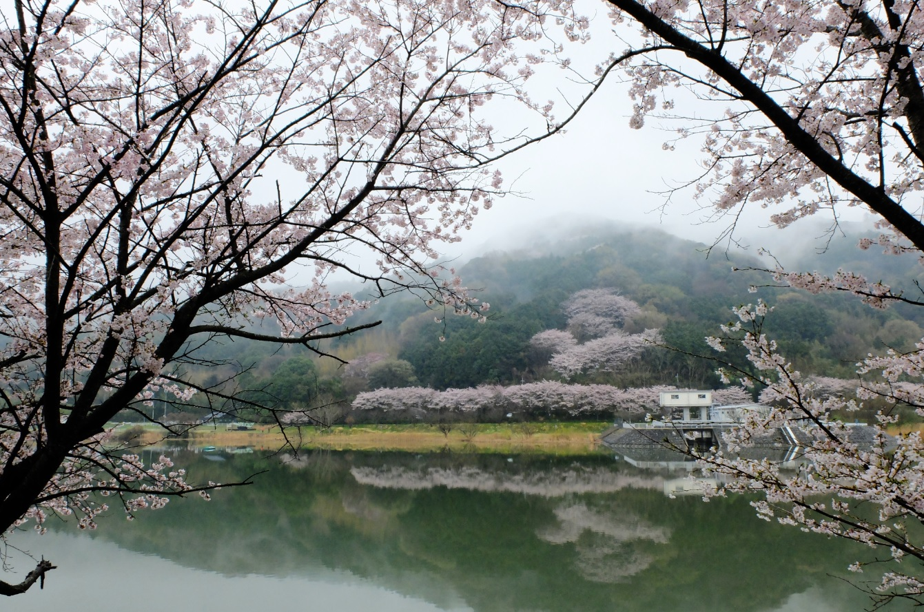 『春の桜川フォトコンテスト 特別賞 雨上り つくし湖』の画像