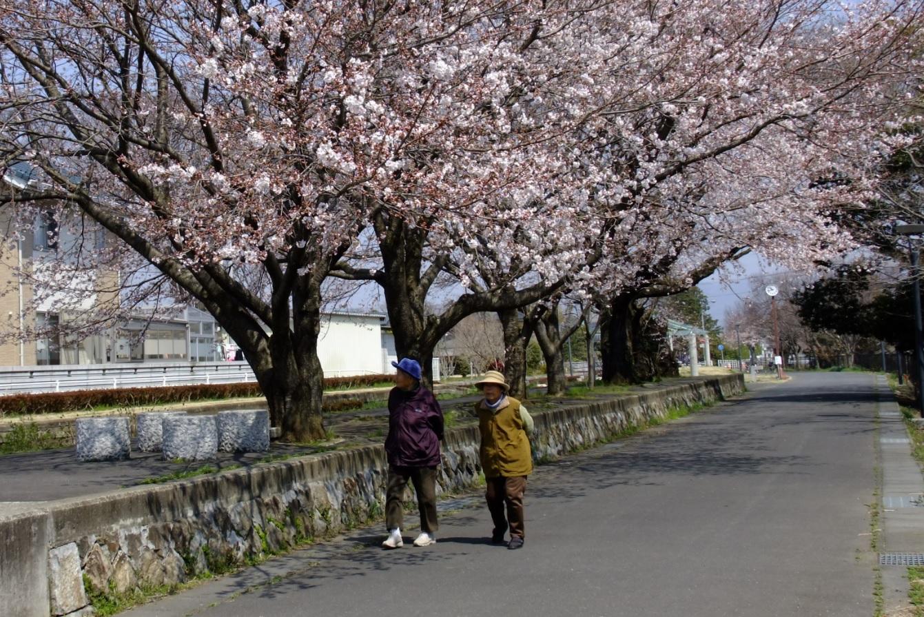 『春の桜川フォトコンテスト 特別賞 里桜 旧真壁駅』の画像