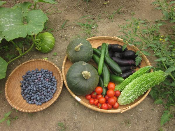『農家民宿Iimura収穫野菜』の画像