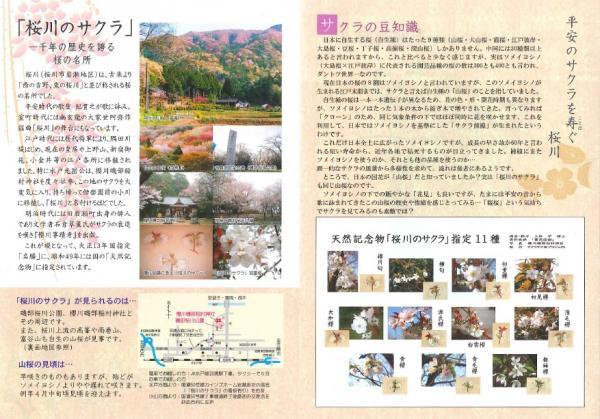 『桜川のサクラパンフレット』の画像
