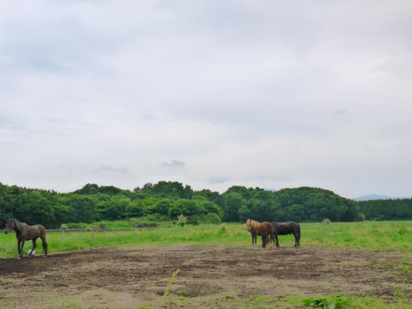 『大和ホースパーク馬場』の画像