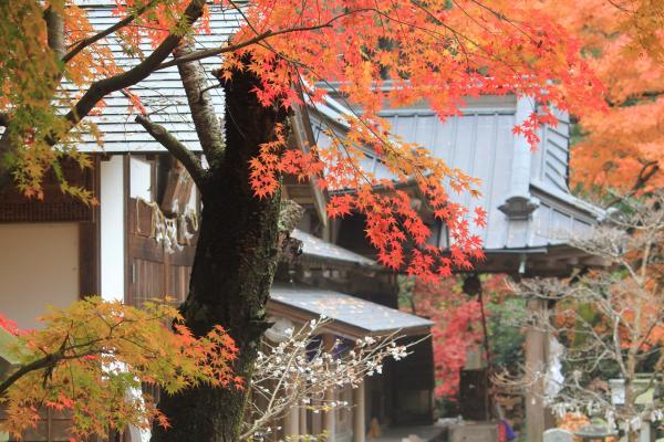 『五所駒瀧神社 紅葉2』の画像