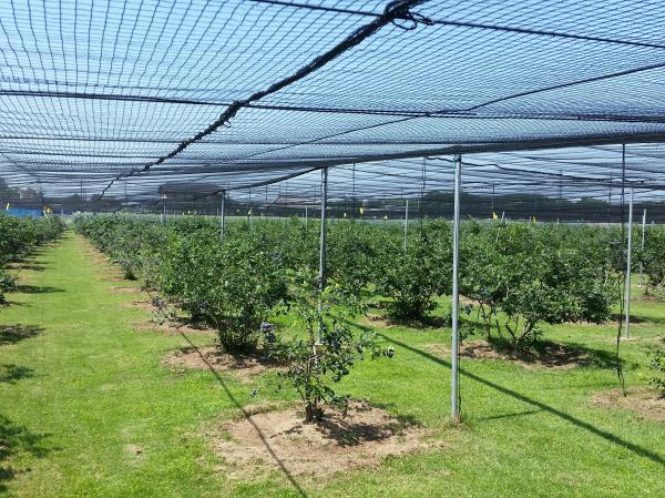 『長島農園』の画像